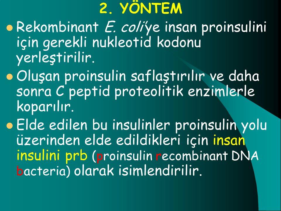 2. YÖNTEM Rekombinant E. coli'ye insan proinsulini için gerekli nukleotid kodonu yerleştirilir.