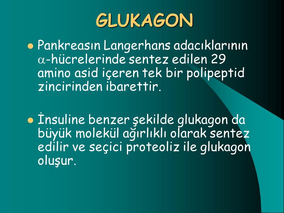 GLUKAGON Pankreasın Langerhans adacıklarının -hücrelerinde sentez edilen 29 amino asid içeren tek bir polipeptid zincirinden ibarettir.