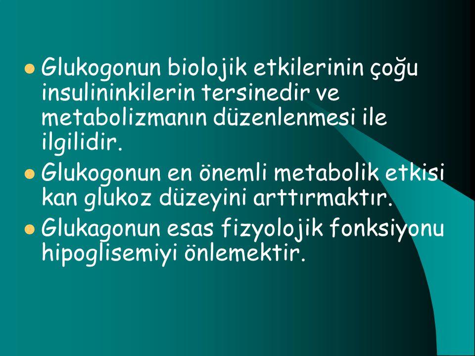 Glukogonun biolojik etkilerinin çoğu insulininkilerin tersinedir ve metabolizmanın düzenlenmesi ile ilgilidir.