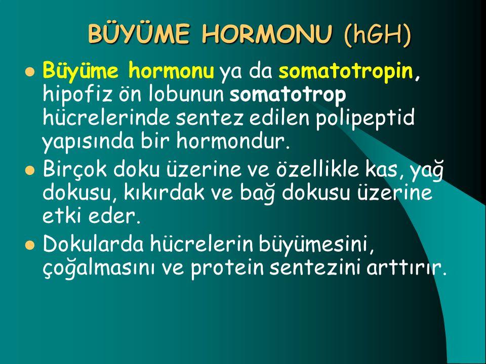 BÜYÜME HORMONU (hGH) Büyüme hormonu ya da somatotropin, hipofiz ön lobunun somatotrop hücrelerinde sentez edilen polipeptid yapısında bir hormondur.