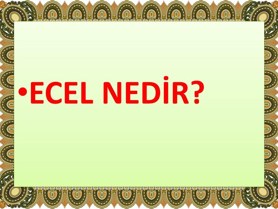 ECEL NEDİR