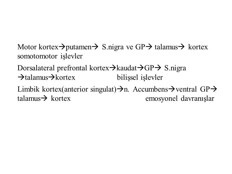 Motor kortexputamen S