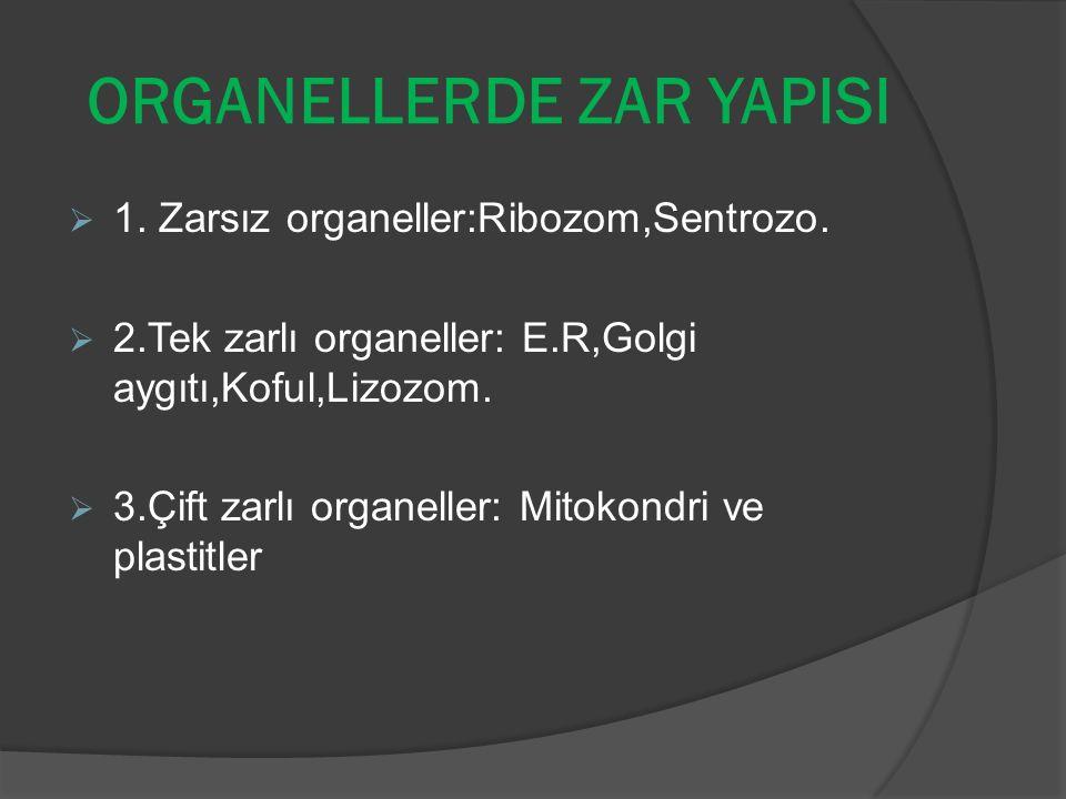 ORGANELLERDE ZAR YAPISI