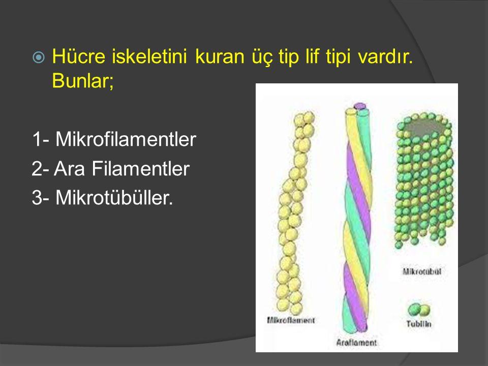 Hücre iskeletini kuran üç tip lif tipi vardır. Bunlar;