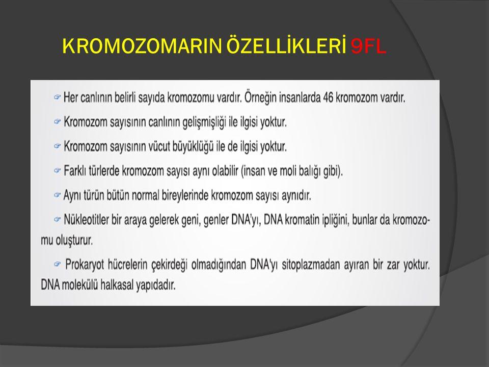 KROMOZOMARIN ÖZELLİKLERİ 9FL
