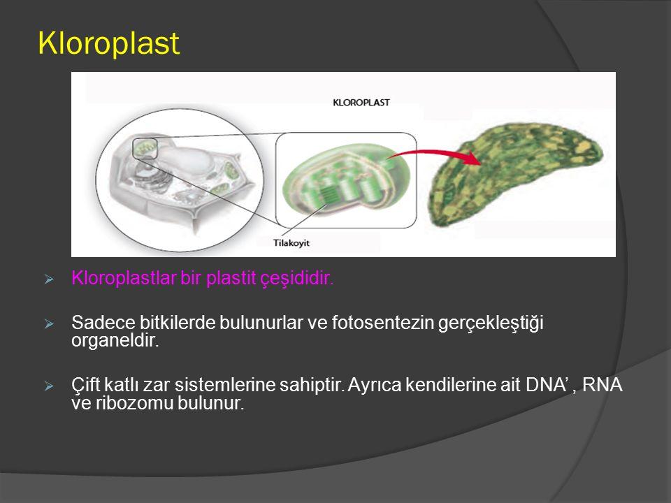 Kloroplast Kloroplastlar bir plastit çeşididir.