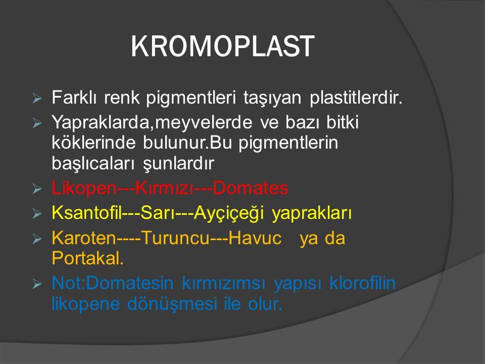 KROMOPLAST Farklı renk pigmentleri taşıyan plastitlerdir.