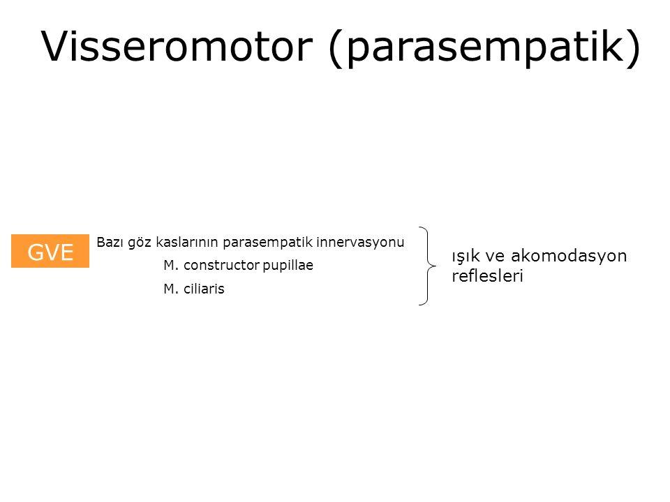 Visseromotor (parasempatik)