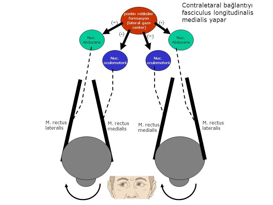 Contraletaral bağlantıyı fasciculus longitudinalis medialis yapar