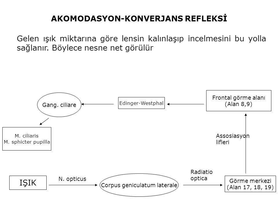 AKOMODASYON-KONVERJANS REFLEKSİ