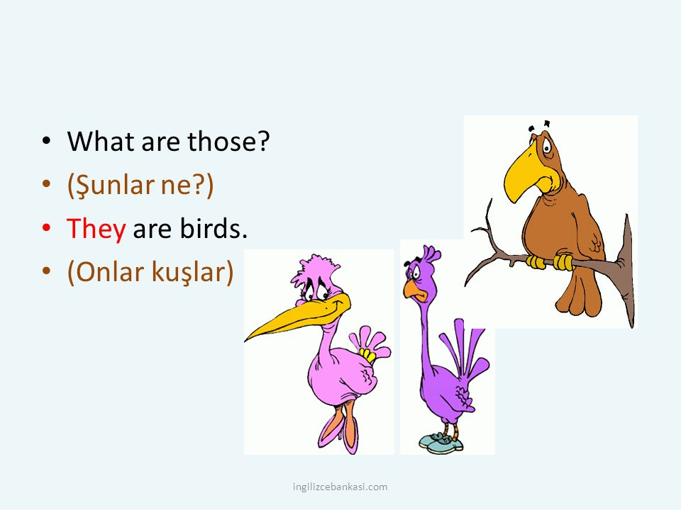 What are those (Şunlar ne ) They are birds. (Onlar kuşlar)