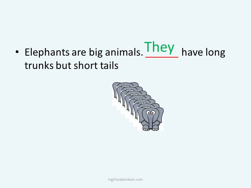 They Elephants are big animals. ______ have long trunks but short tails ingilizcebankasi.com
