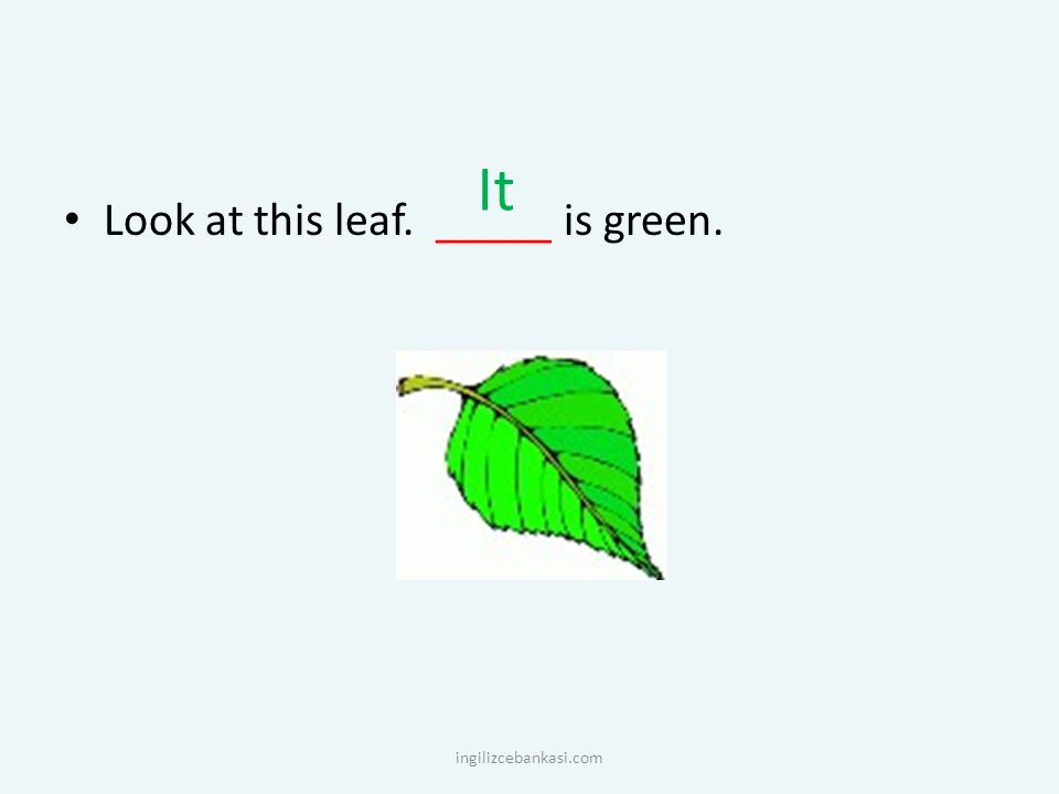 It Look at this leaf. _____ is green. ingilizcebankasi.com