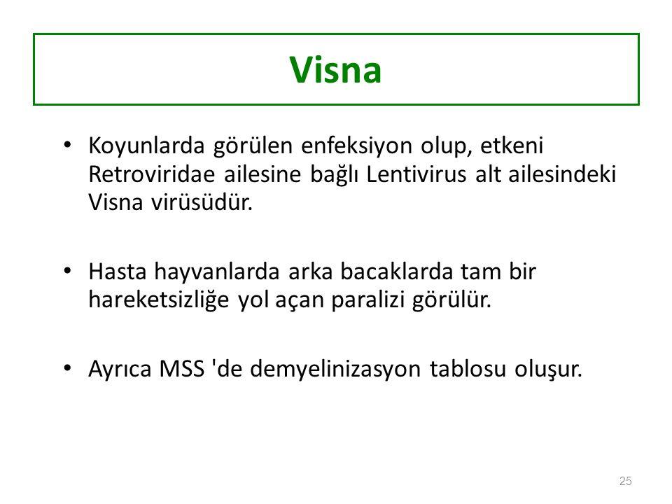 Visna Koyunlarda görülen enfeksiyon olup, etkeni Retroviridae ailesine bağlı Lentivirus alt ailesindeki Visna virüsüdür.