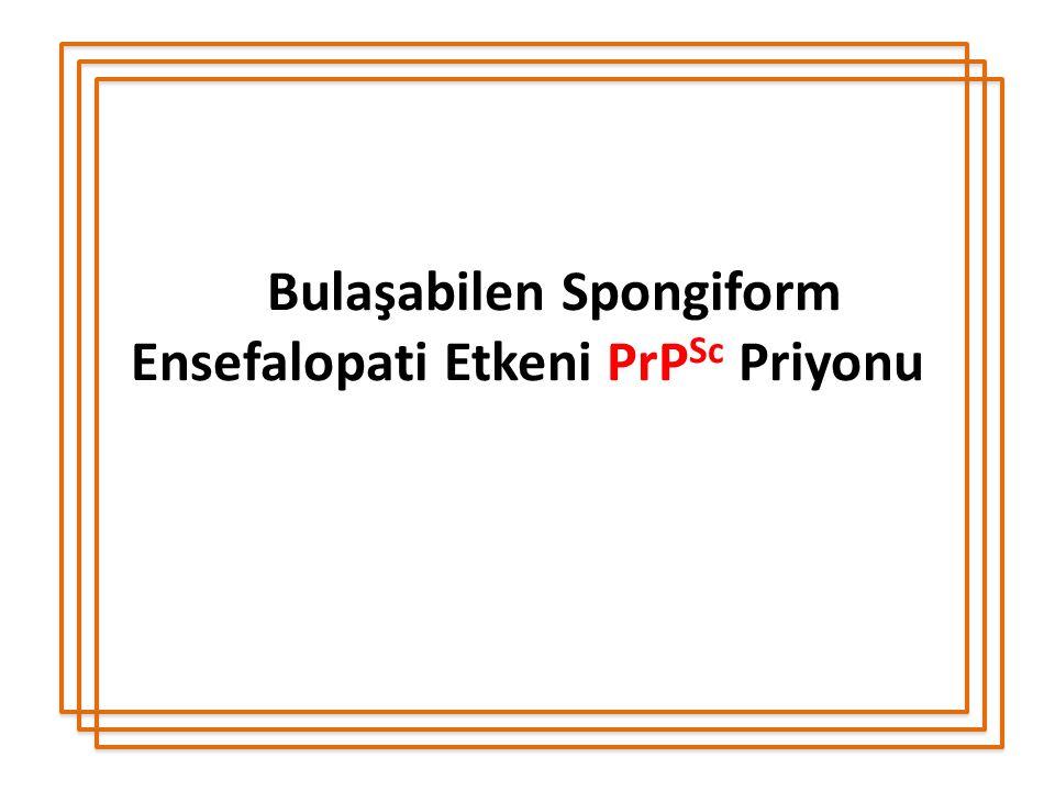 Bulaşabilen Spongiform Ensefalopati Etkeni PrPSc Priyonu