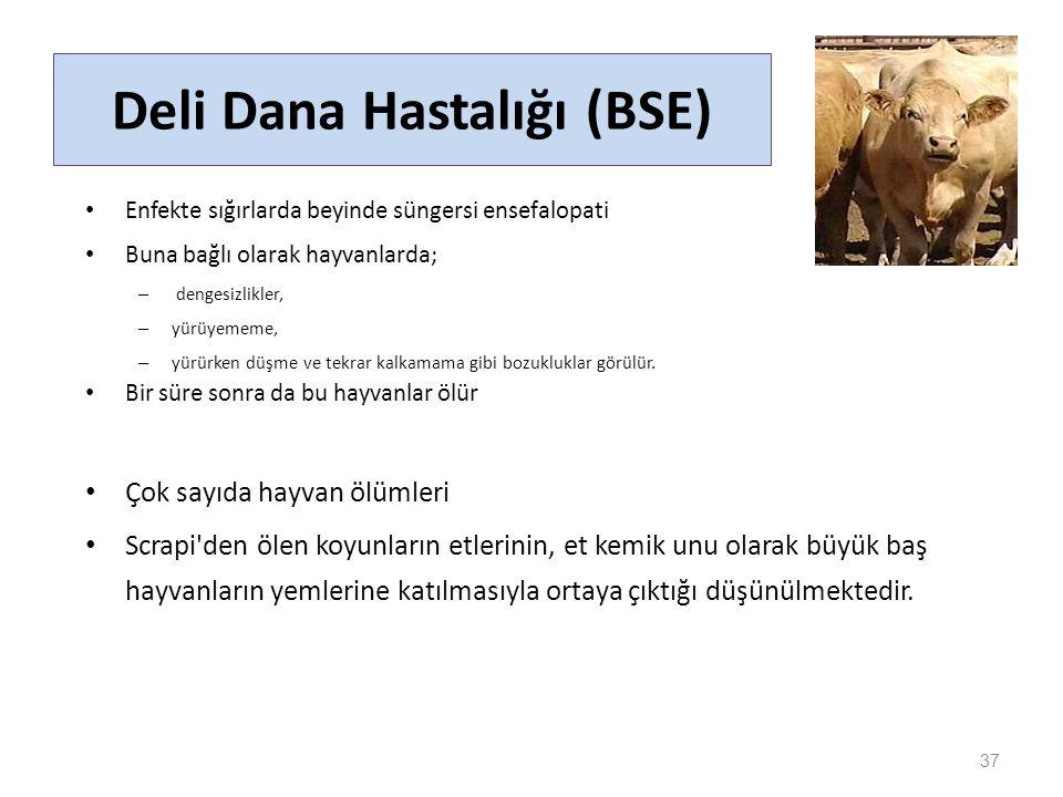 Deli Dana Hastalığı (BSE)