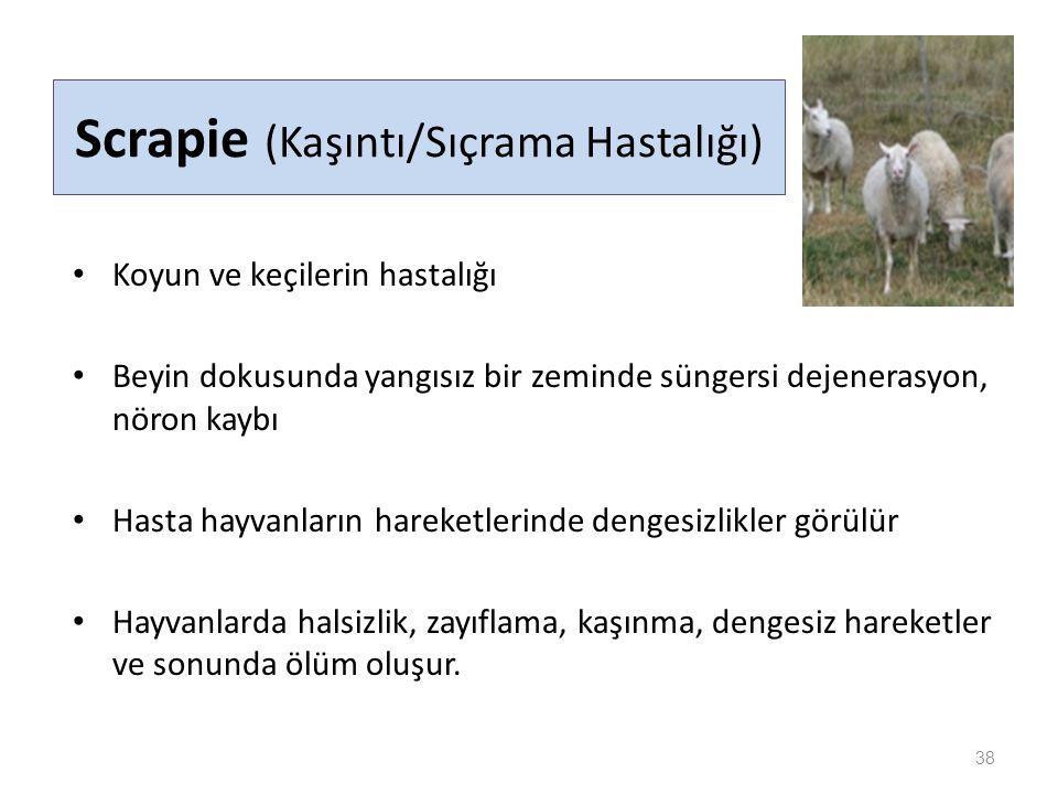 Scrapie (Kaşıntı/Sıçrama Hastalığı)