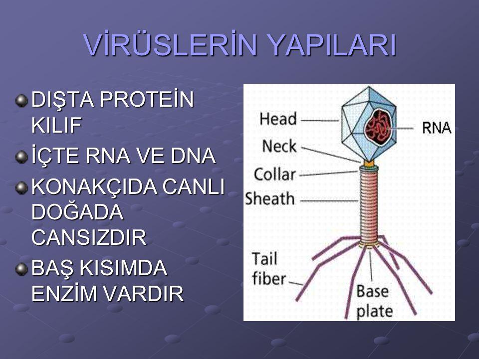 VİRÜSLERİN YAPILARI DIŞTA PROTEİN KILIF İÇTE RNA VE DNA