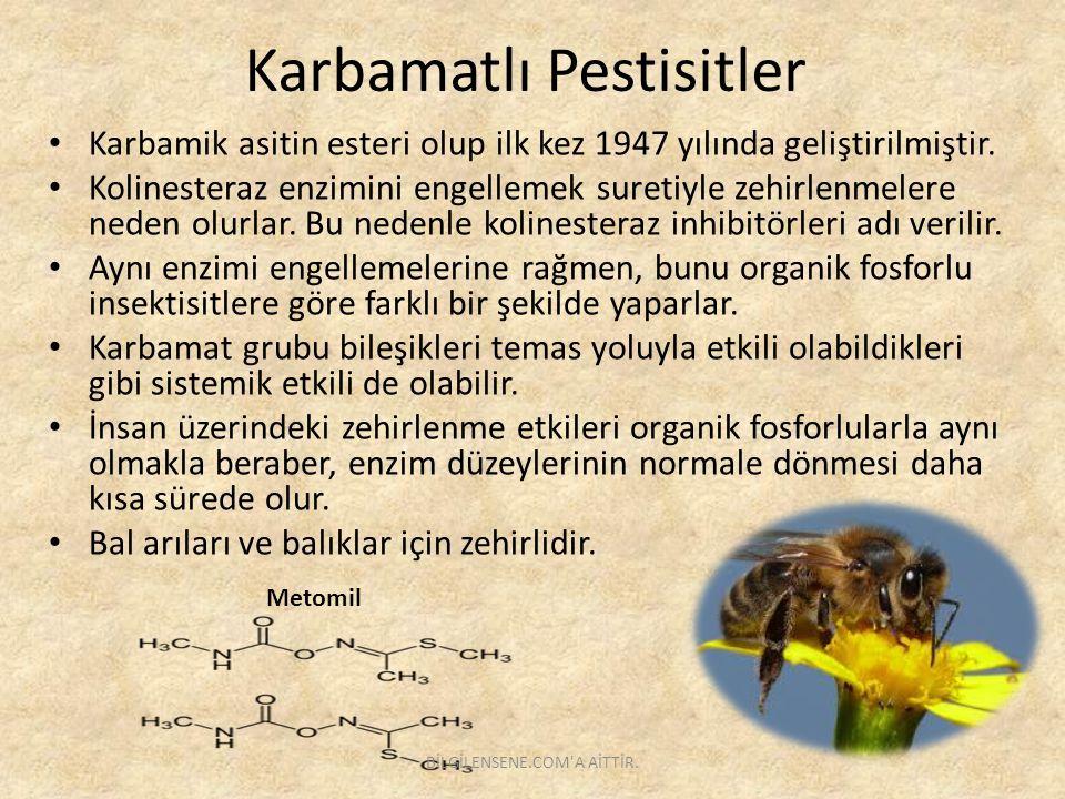 Karbamatlı Pestisitler