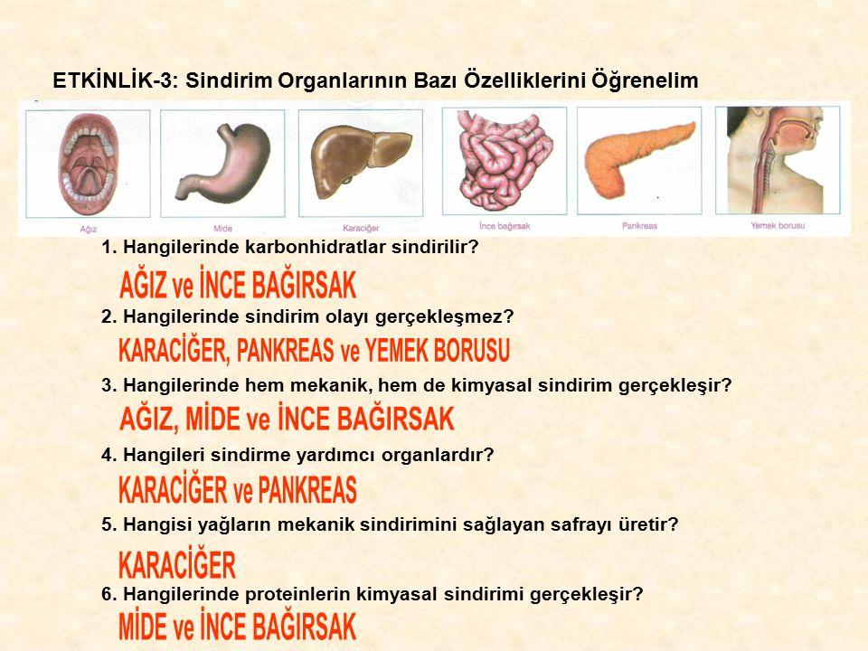 ETKİNLİK-3: Sindirim Organlarının Bazı Özelliklerini Öğrenelim