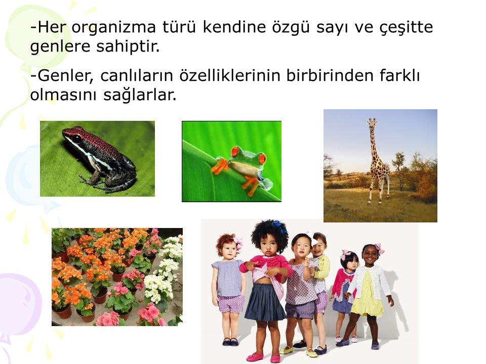-Her organizma türü kendine özgü sayı ve çeşitte genlere sahiptir.