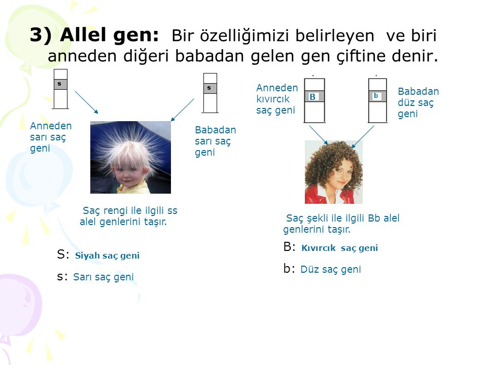 3) Allel gen: Bir özelliğimizi belirleyen ve biri anneden diğeri babadan gelen gen çiftine denir.