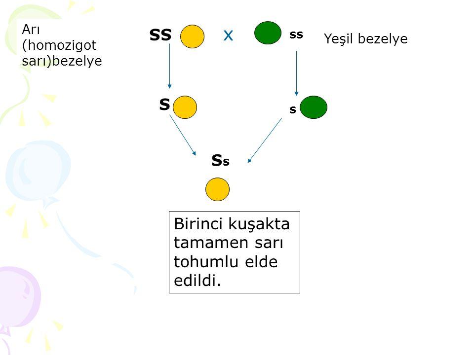 x SS S Ss Birinci kuşakta tamamen sarı tohumlu elde edildi. Arı