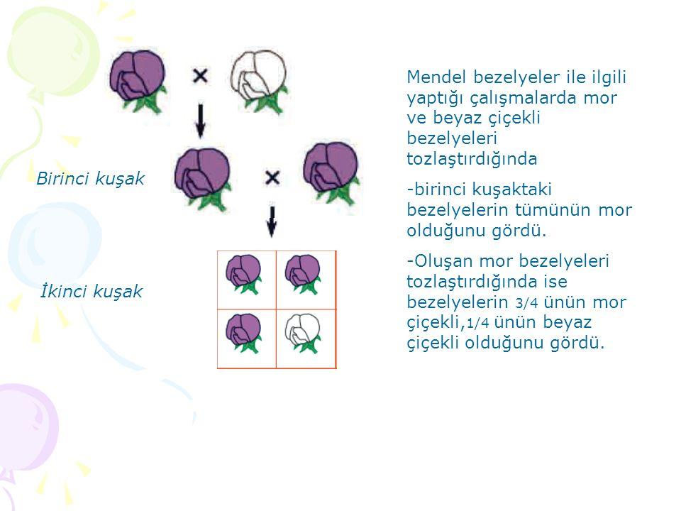 Mendel bezelyeler ile ilgili yaptığı çalışmalarda mor ve beyaz çiçekli bezelyeleri tozlaştırdığında