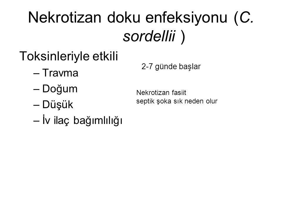 Nekrotizan doku enfeksiyonu (C. sordellii )