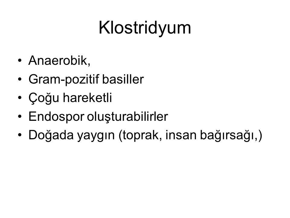 Klostridyum Anaerobik, Gram-pozitif basiller Çoğu hareketli