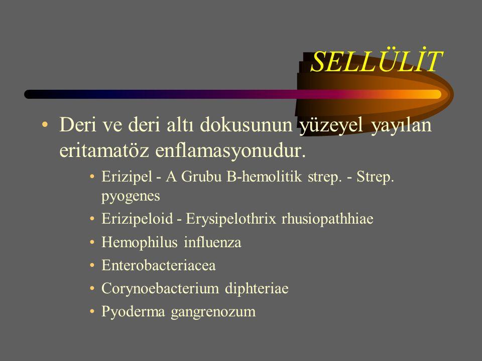 SELLÜLİT Deri ve deri altı dokusunun yüzeyel yayılan eritamatöz enflamasyonudur. Erizipel - A Grubu B-hemolitik strep. - Strep. pyogenes.