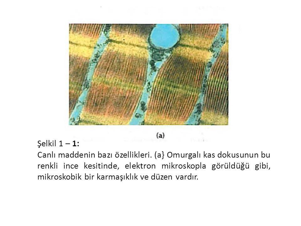 Şelkil 1 – 1: