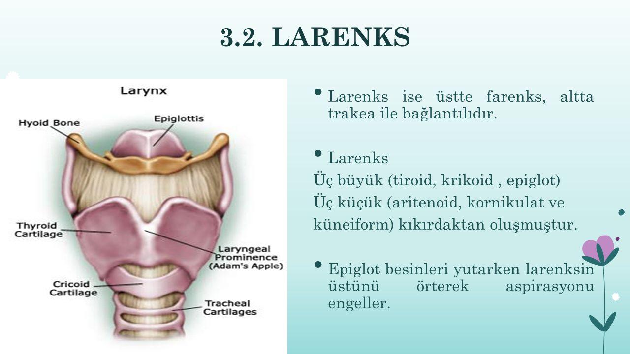 3.2. LARENKS Larenks ise üstte farenks, altta trakea ile bağlantılıdır. Larenks. Üç büyük (tiroid, krikoid , epiglot)