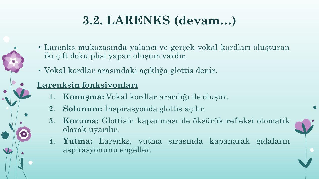 3.2. LARENKS (devam…) Larenks mukozasında yalancı ve gerçek vokal kordları oluşturan iki çift doku plisi yapan oluşum vardır.