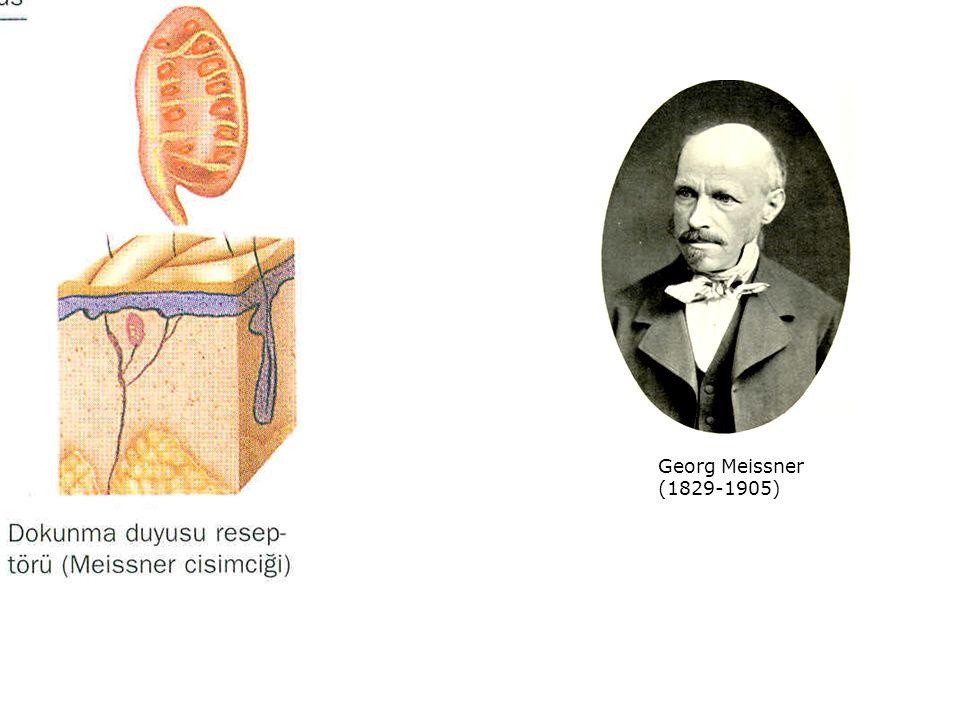 Georg Meissner (1829-1905)