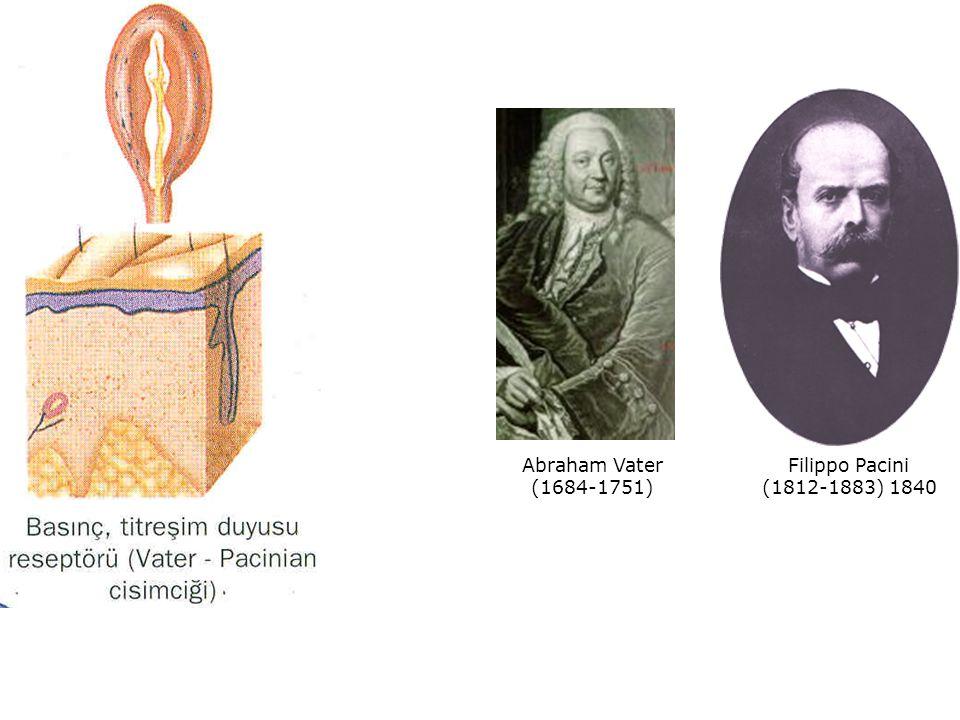Abraham Vater (1684-1751) Filippo Pacini (1812-1883) 1840