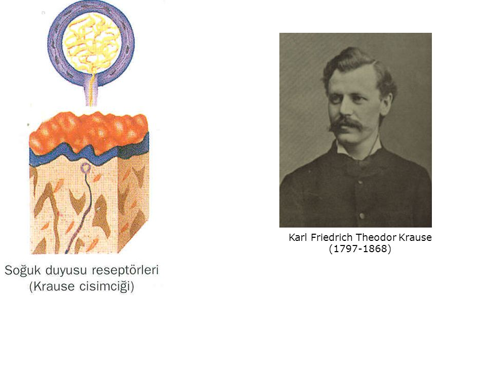 Karl Friedrich Theodor Krause