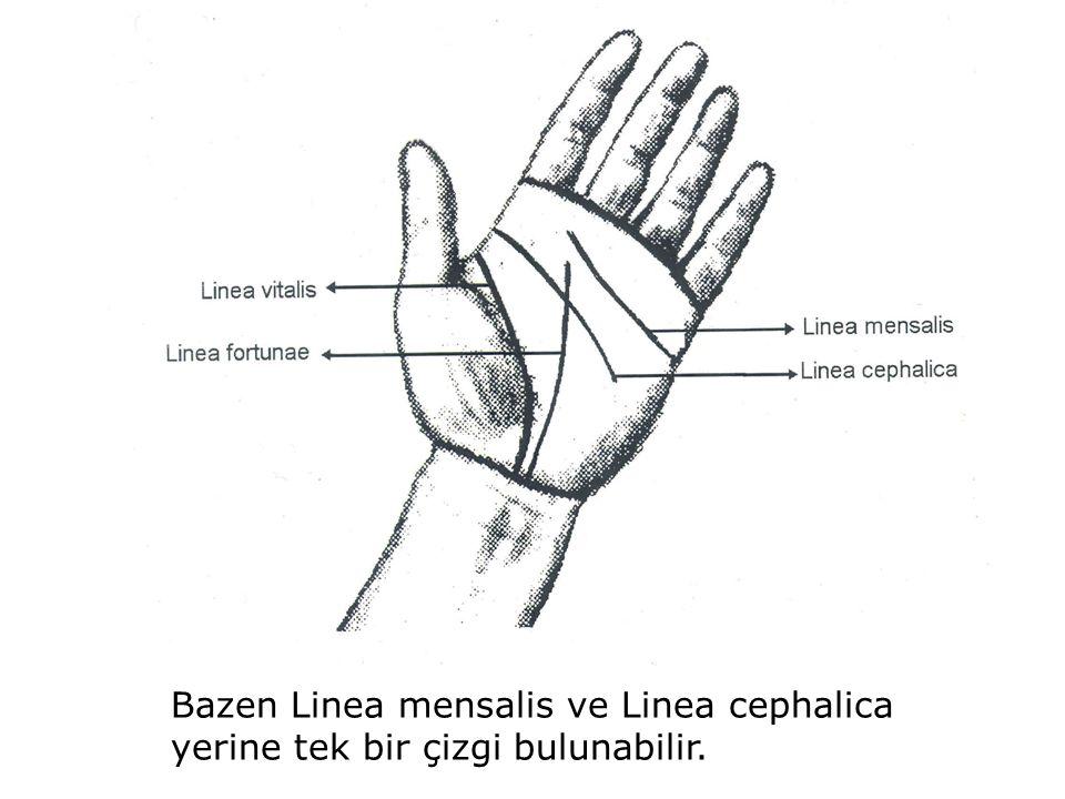 Bazen Linea mensalis ve Linea cephalica