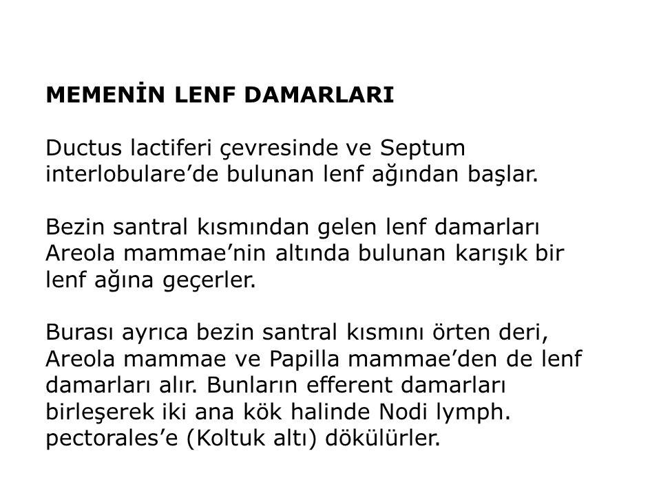 MEMENİN LENF DAMARLARI