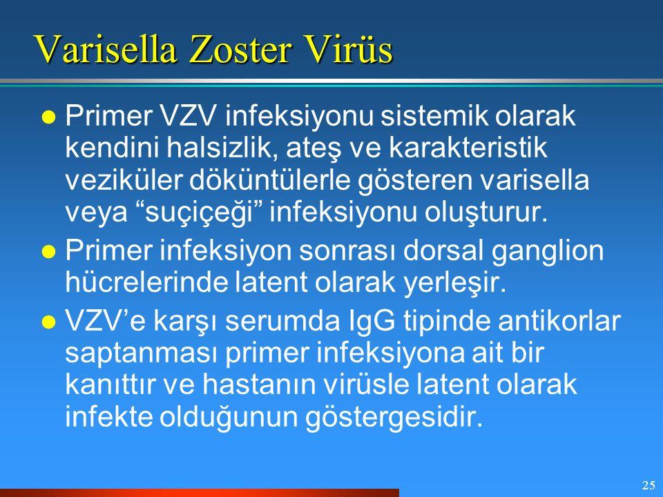 Varisella Zoster Virüs
