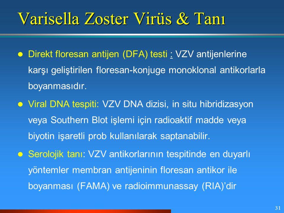 Varisella Zoster Virüs & Tanı