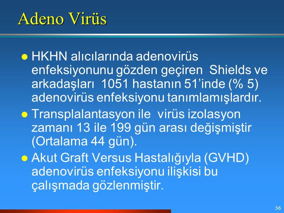 Adeno Virüs