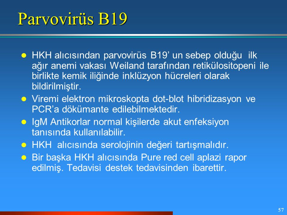 Parvovirüs B19