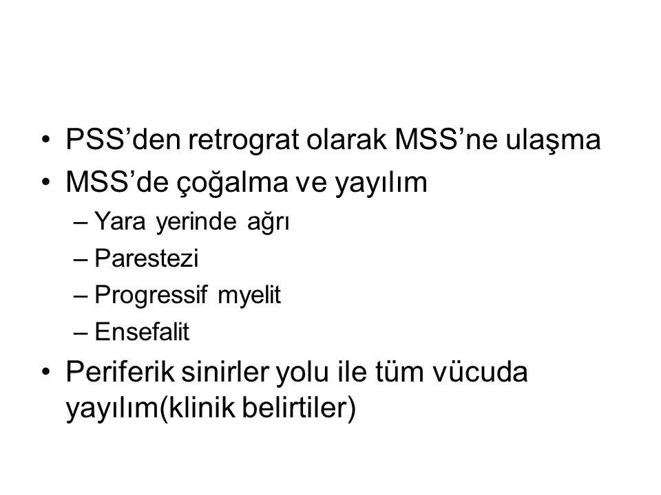 PSS'den retrograt olarak MSS'ne ulaşma MSS'de çoğalma ve yayılım
