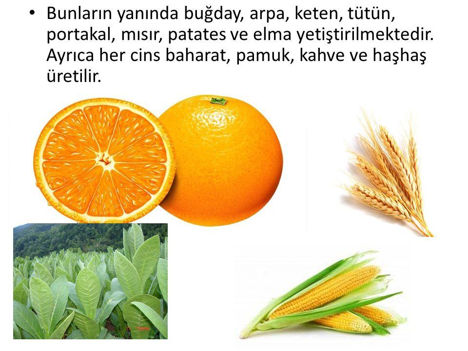 Bunların yanında buğday, arpa, keten, tütün, portakal, mısır, patates ve elma yetiştirilmektedir.