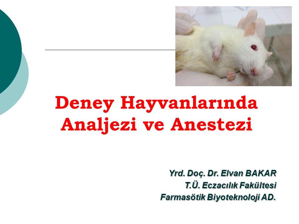Deney Hayvanlarında Analjezi ve Anestezi