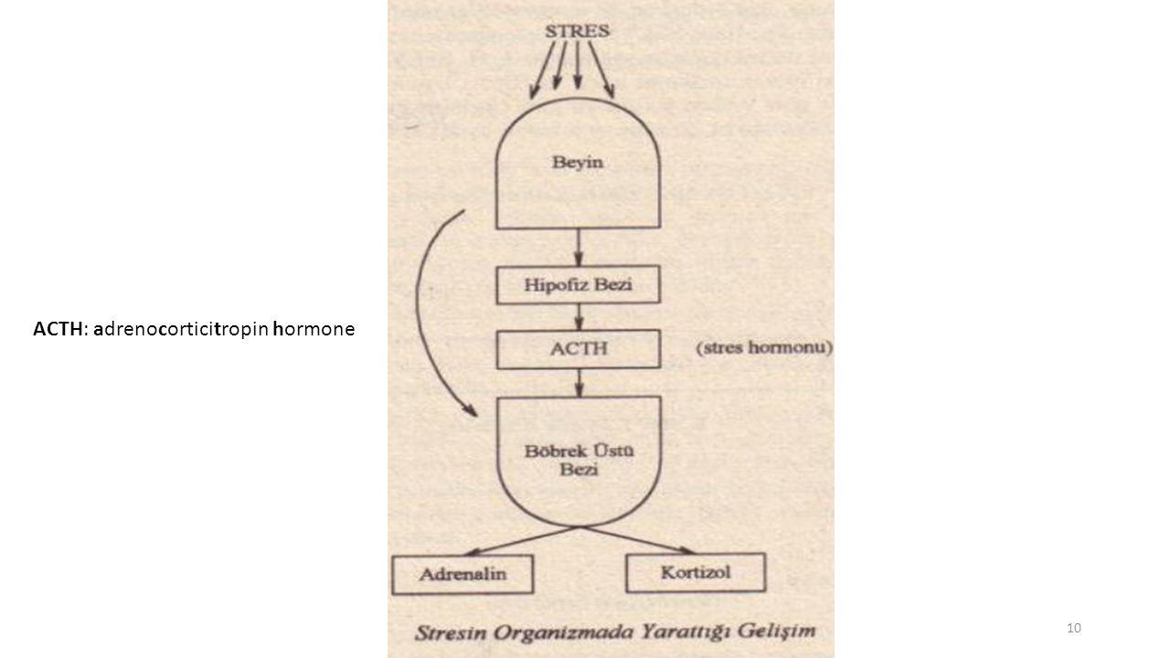 ACTH: adrenocorticitropin hormone