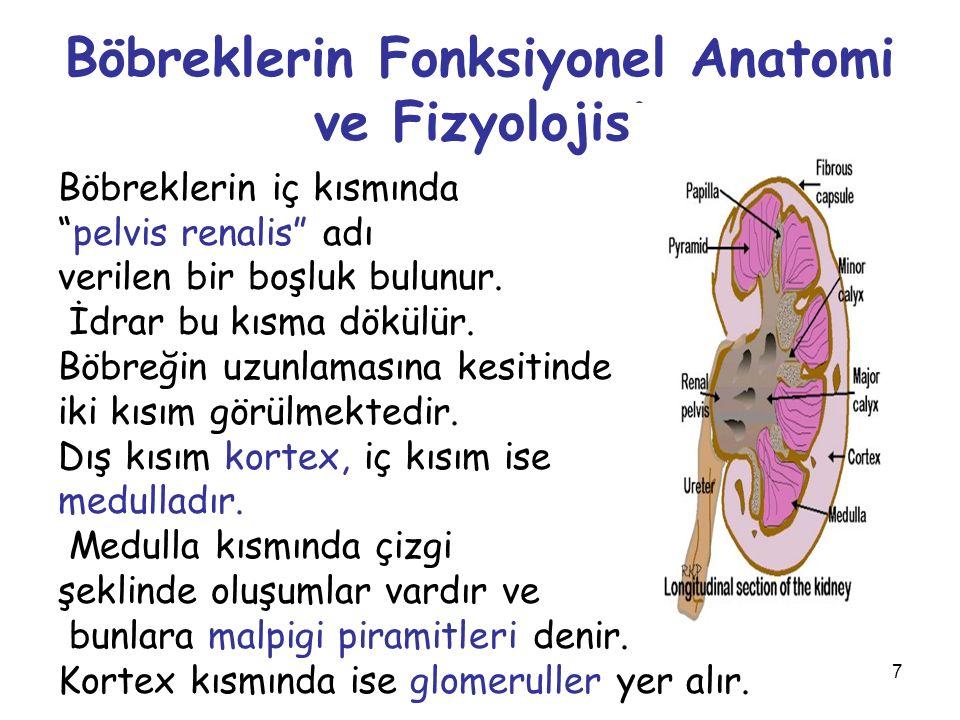 Böbreklerin Fonksiyonel Anatomi ve Fizyolojisi