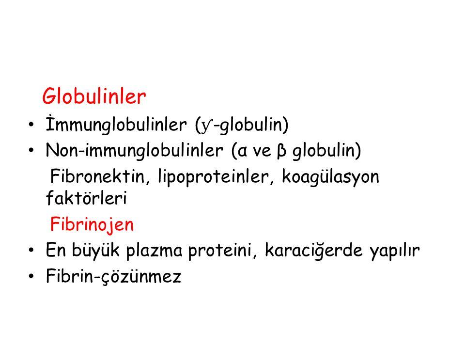 Globulinler İmmunglobulinler (ƴ-globulin)