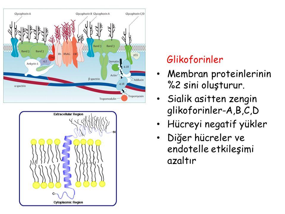 Glikoforinler Membran proteinlerinin %2 sini oluşturur.